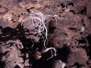 Afloramiento de sales en el pasaje de acceso a la cámara funeraria de TT49